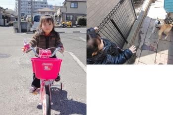 あま自転車いちご.jpg
