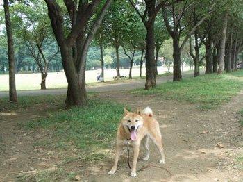 いちご久々の彩の森.jpg