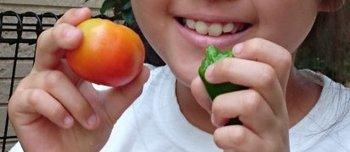 トマトとピーマン.jpg