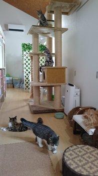 猫カフェ02.jpg