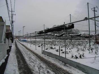 近隣雪景色.jpg