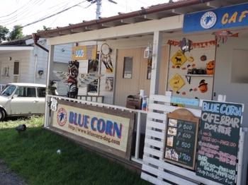 BlueCorn3.jpg