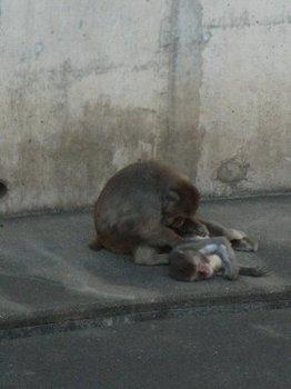 お猿さん癒されます・・・.jpg